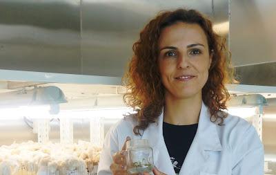 Investigação | Equipa da FCTUC identifica processo chave na clonagem de plantas