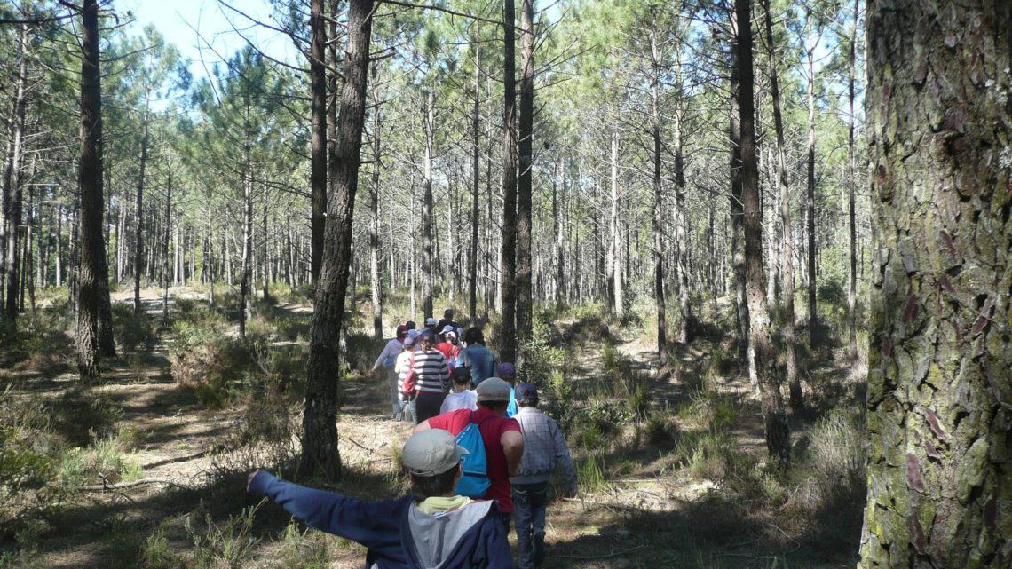 Câmara de Cantanhede promove ação de sensibilização sobre ambiente e biodiversidade