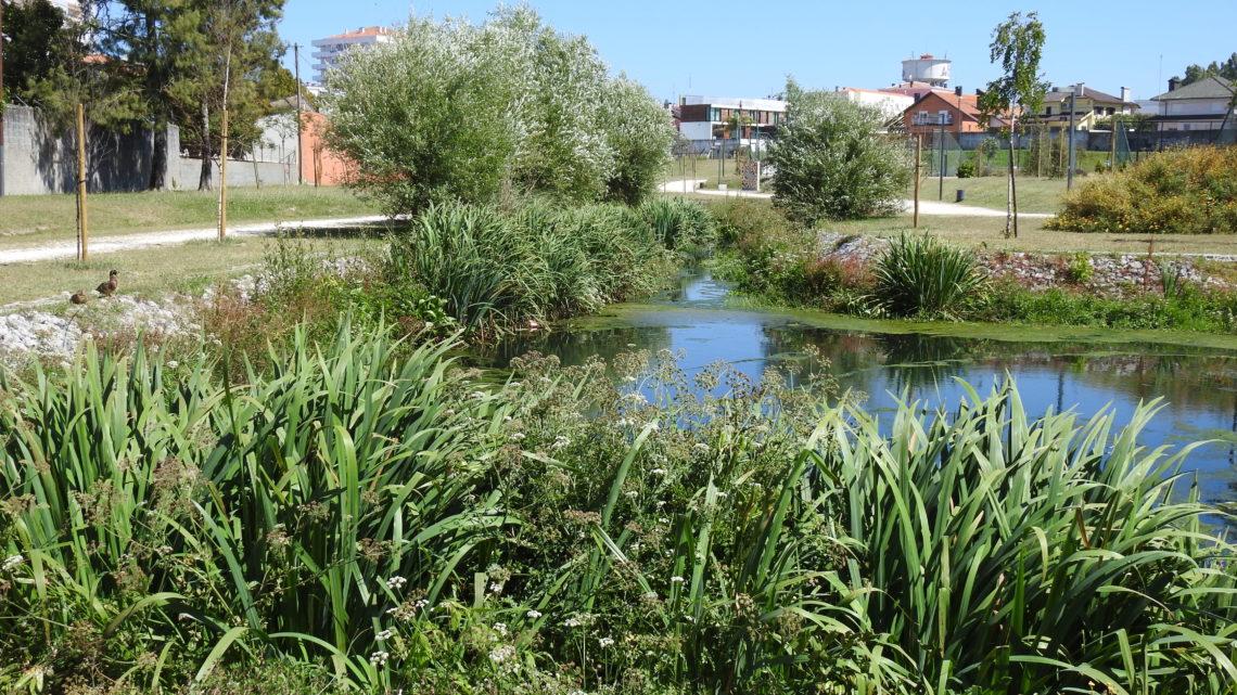 Aveiro | Falta de limpeza dos lagos nas traseiras do Estádio Mário Duarte