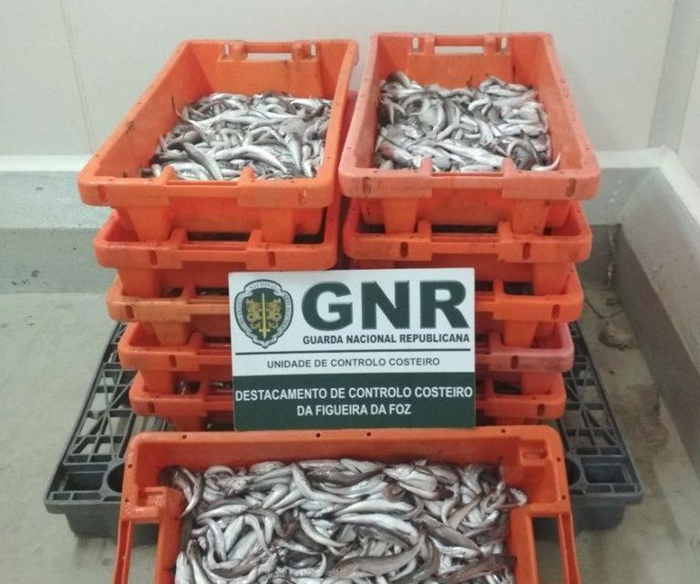 Nazaré | GNR doou 110 quilos de pescada na Nazaré