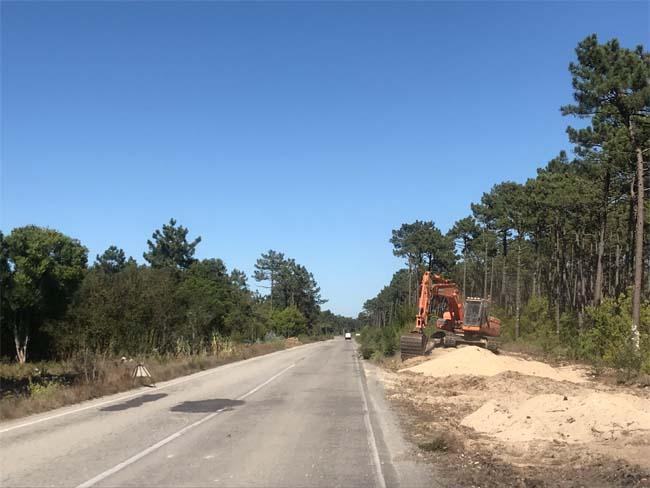 EDP Distribuição aposta na proteção da floresta no distrito de Aveiro