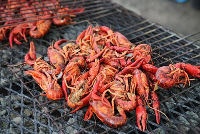 Reguengos de Monsaraz | 750 quilos de lagostins em preparação para a sexta edição do Festival do Lagostim
