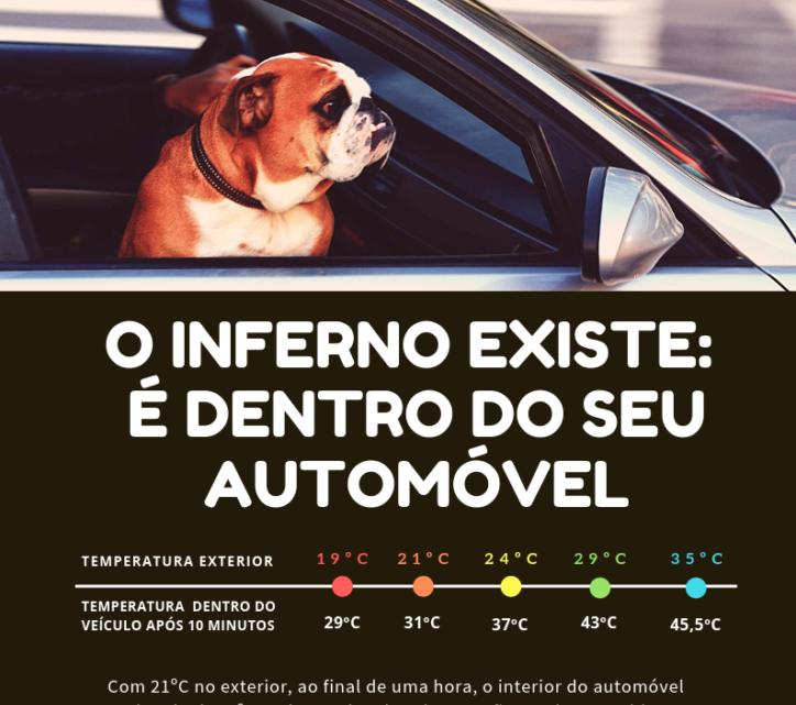 Nacional | ONDAID lança campanha de prevenção para golpe de calor em animais de Companhia