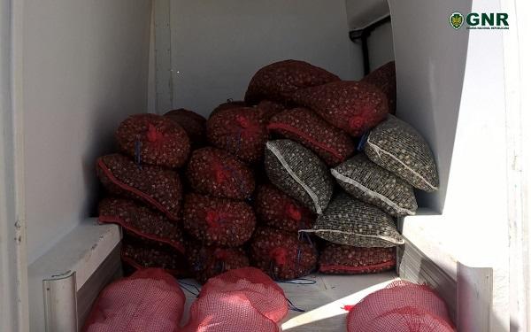 Região de Aveiro   Apreendidos 181 quilos de berbigão na Gafanha da Nazaré