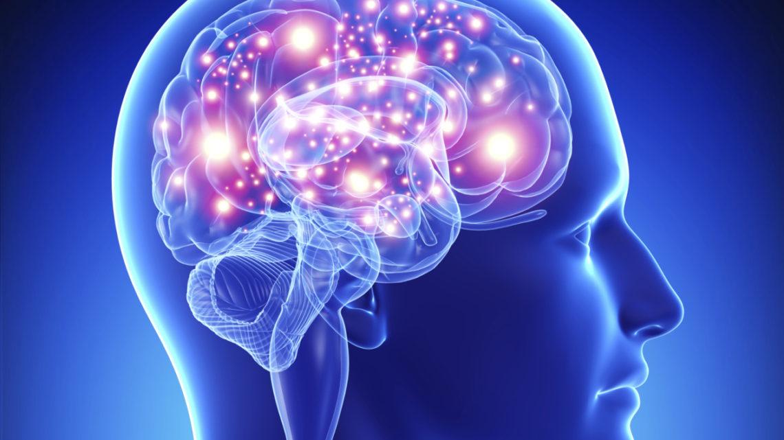 UNIVERSIDADE | Investigação desenvolvida em Coimbra destaca funcionamento do cérebro em rede