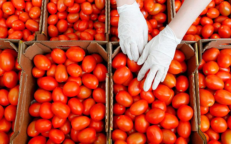Indústria do tomate estima prejuízo diário de 4 milhões de euros com greve dos motoristas
