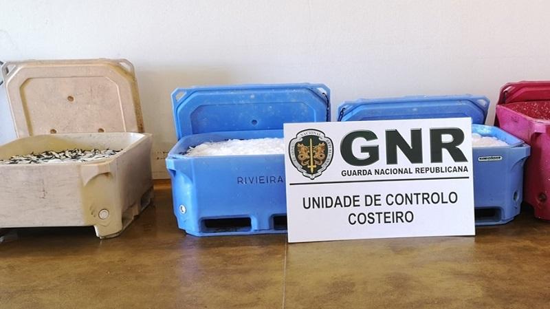 Olhão | GNR apreende 910 quilos de sardinhas