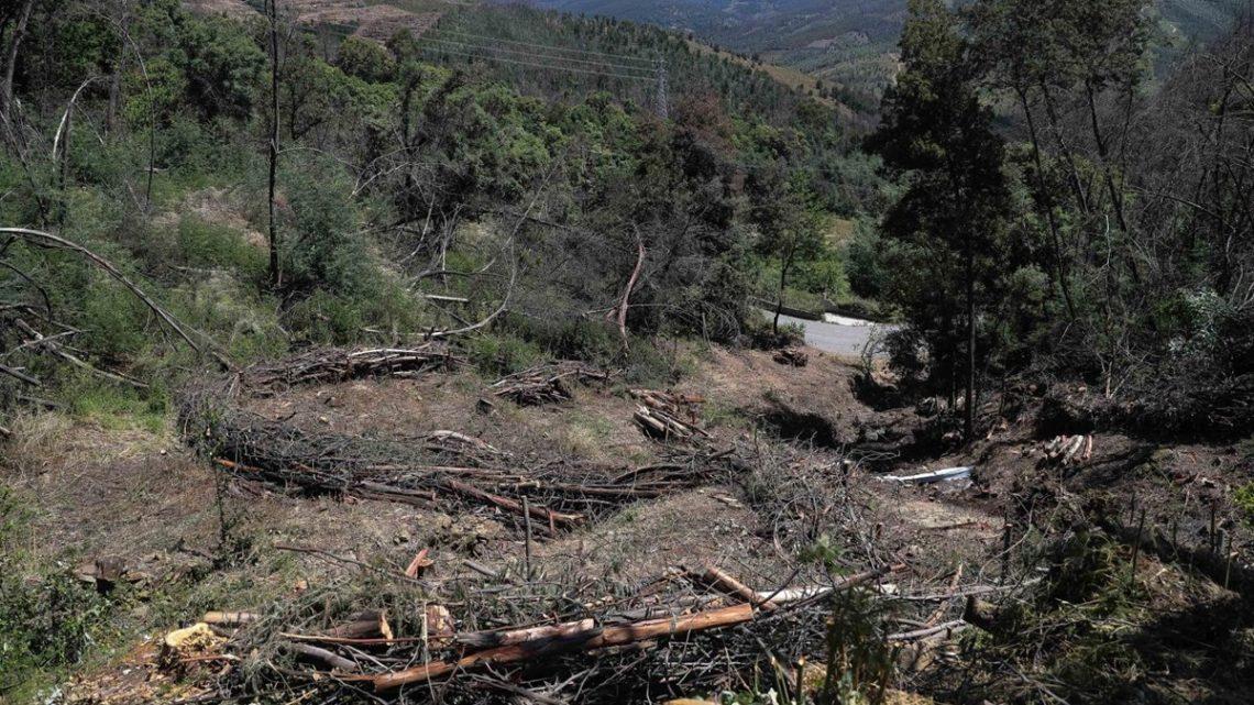 Três municípios candidataram-se este ano ao financiamento para limpeza da floresta