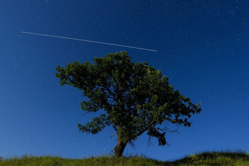 Abate de sobreiros por causa das barragens do Alto Tâmega criticado pela Quercus