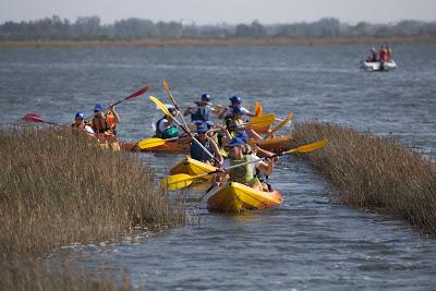 Região de Aveiro | A bordo de um kayak na Ria de Aveiro: este sábado à tarde com 275 participantes