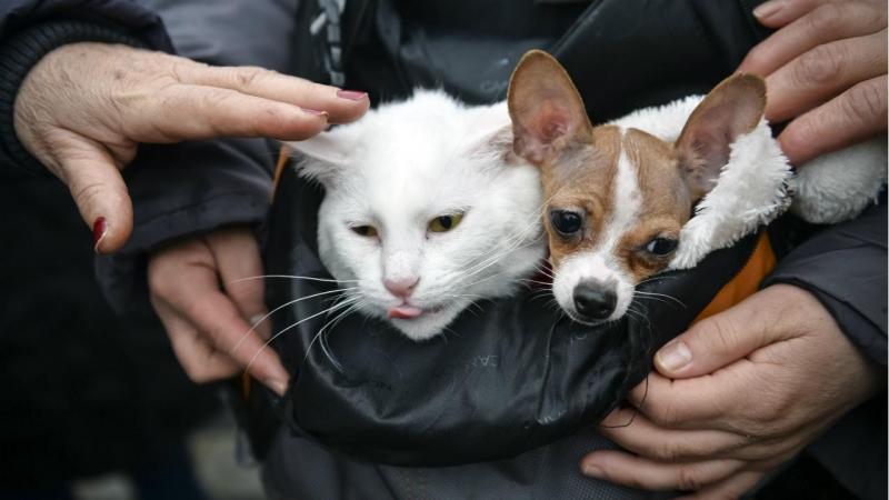 Nacional | Quase 50% das autarquias não têm como cuidar e esterilizar cães e gatos