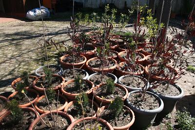Proença-a-Nova | Troque resíduos por plantas a 21 de outubro