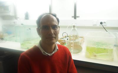 Coimbra | Tornar a agricultura mais ecológica e sustentável com a ajuda das algas