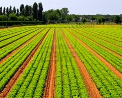 Jovens agricultores têm até hoje para se candidatar a prémio à instalação