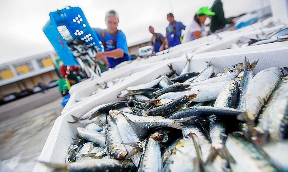 Governo revoga permissão de pesca de sardinha misturada com outras espécies