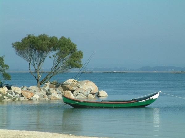 GNR apreendeu rede de pesca ilegal, pescado fresco e bivalves na Ria de Aveiro