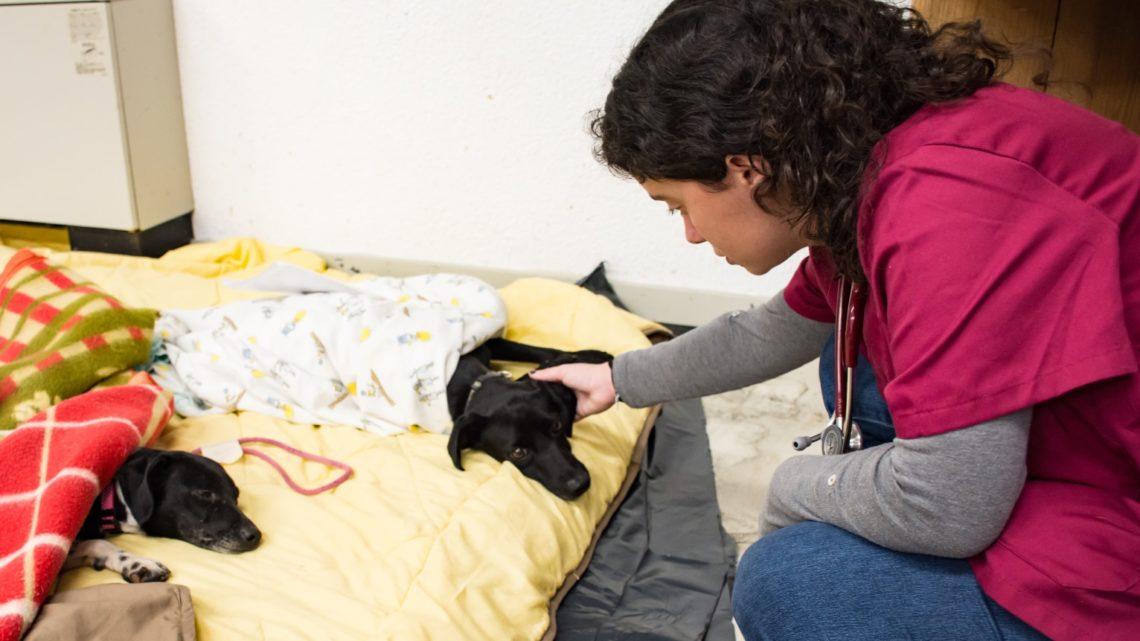 """Programa """"Esterilizar Solidário"""" – Câmara Municipal e Universidade de Évora promovem esterilização gratuita de animais domésticos"""