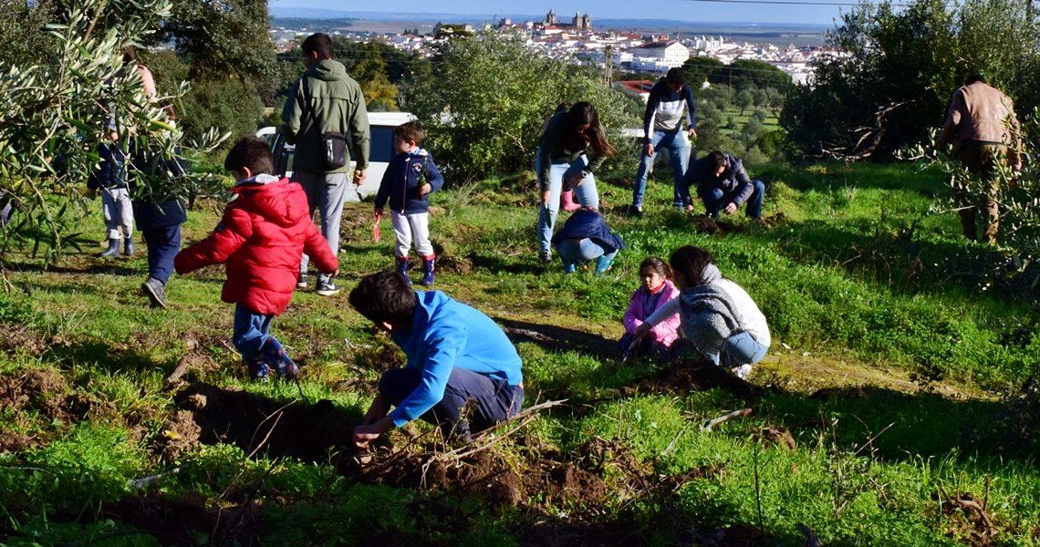 Évora | 2000 Novas árvores estão a ser plantadas no Alto de S. Bento – Câmara Municipal e Comunidade unidas na proteção ambiental