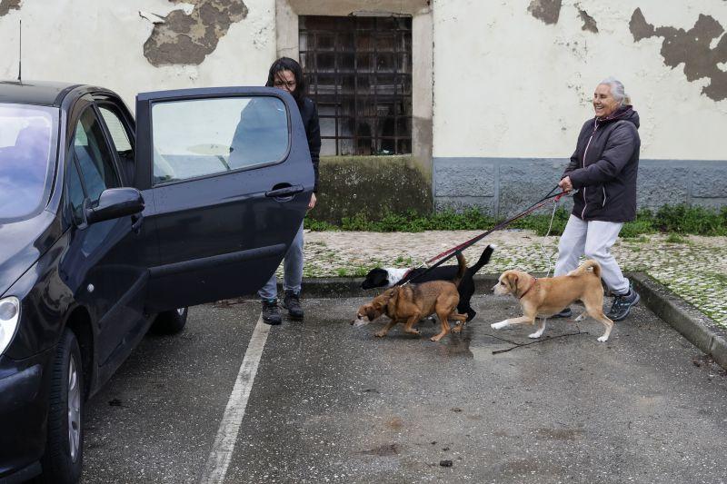 Retirados 100 animais do canil de Coimbra devido a subida do caudal do rio