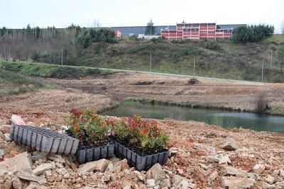 Quatro hectares junto ao Parque Empresarial de Proença-a-Nova vão ser reflorestados