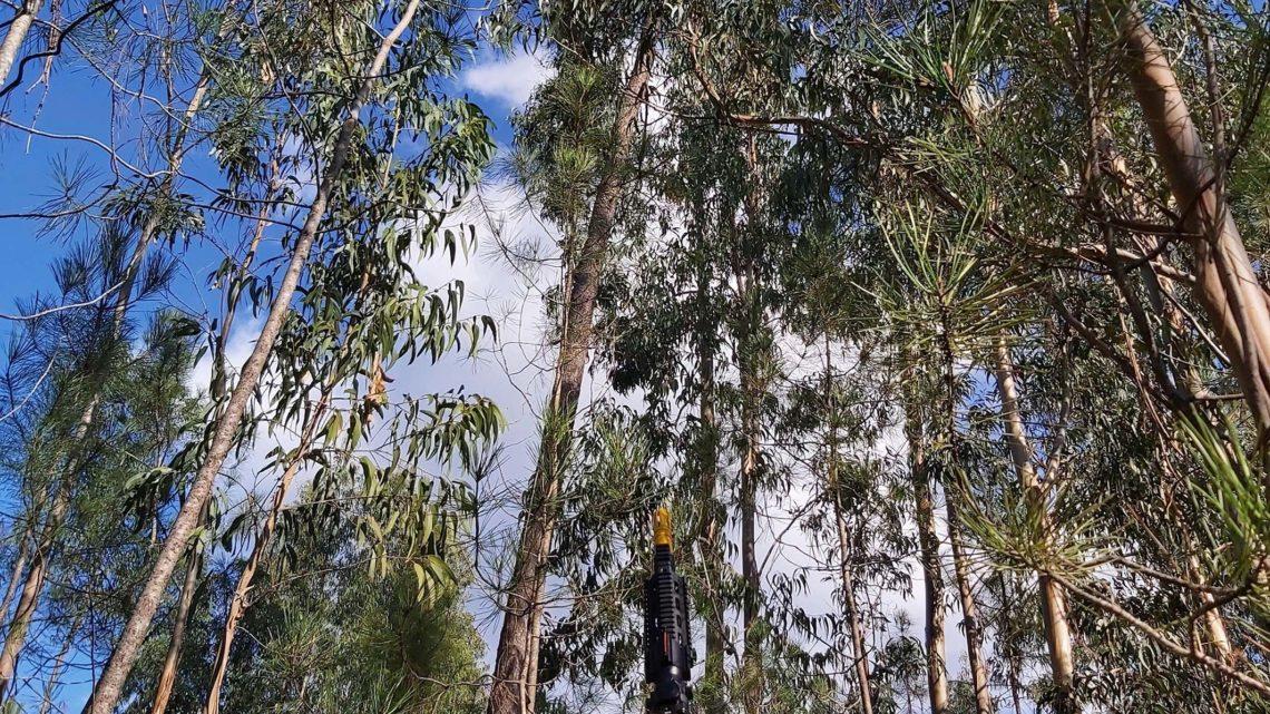 Município de Cantanhede com 388 ninhos de vespa Velutina destruídos só em 2019