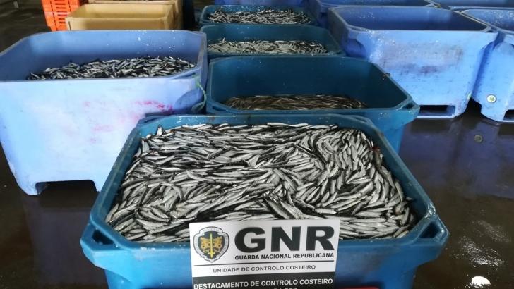 Mais de 100 quilos de pescado fresco apreendidos na Gafanha da Nazaré