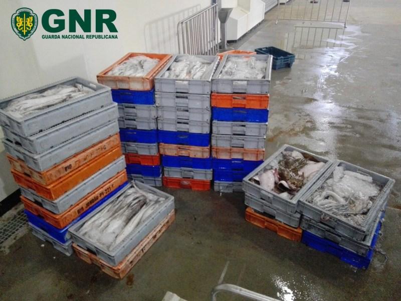 """GNR de Aveiro apreende 870 quilos de pescado fresco por """"fuga à lota"""""""