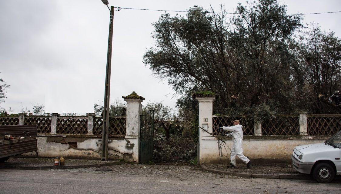 Évora | Em defesa da saúde pública – Câmara Municipal procede a limpeza coerciva de colónia de garças-boieiras