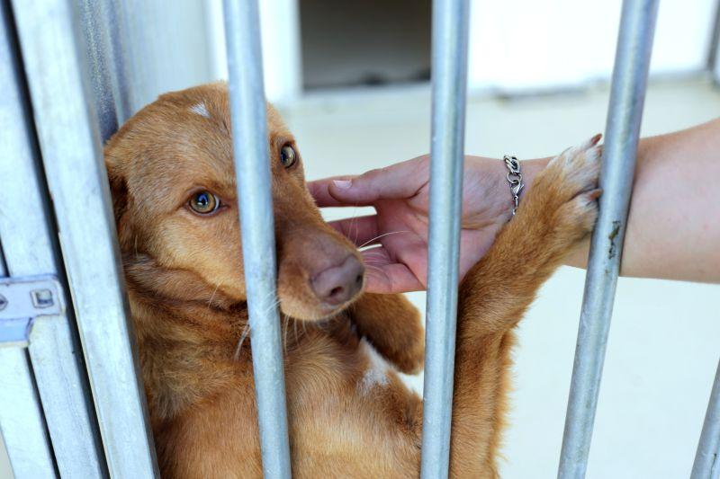 GNR registou mais de 50 queixas por maus-tratos a animais desde o início do ano