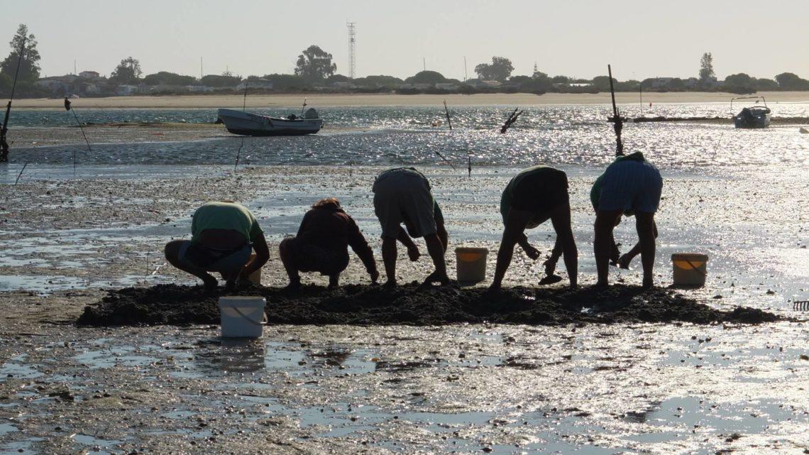 Poluição na Ria Formosa obriga à mudança de viveiros