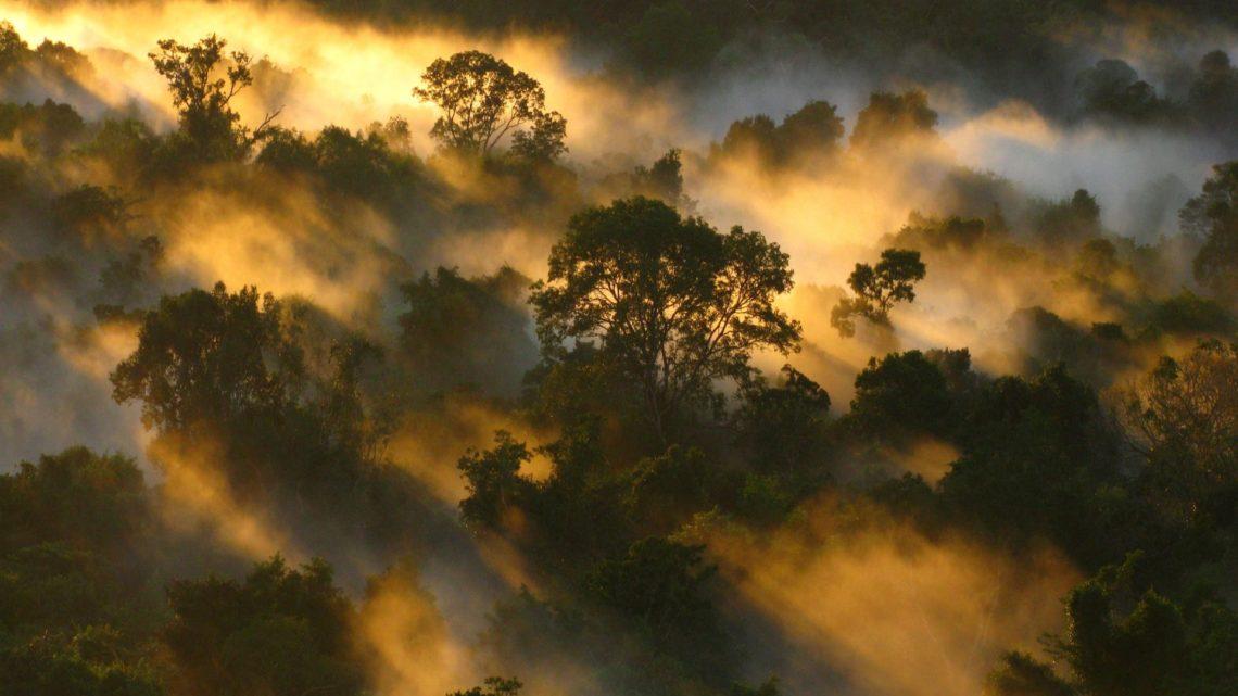 Florestas tropicais estão se tornando fontes de carbono, ao invés de absorvê-los da atmosfera