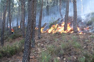 Proença-a-Nova | Concelho passa a dispor de quatro técnicos certificados em fogo controlado
