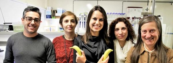 Universidade de Aveiro descobre que cascas de banana removem metais de águas contaminadas