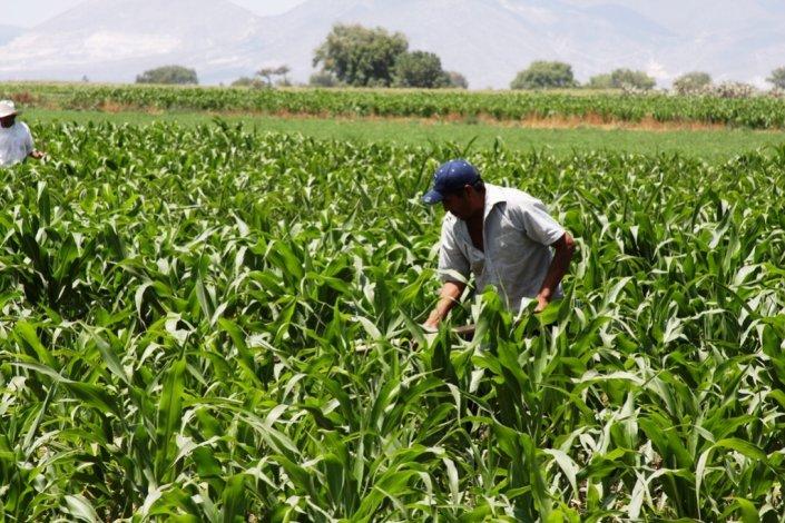NACIONAL|AGRICULTURA: CNA pede que lavoura nacional e agricultores não sejam esquecidos
