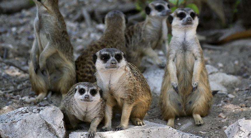 Covid-19: Jardim zoológico alemão admite abater animais para alimentar outros