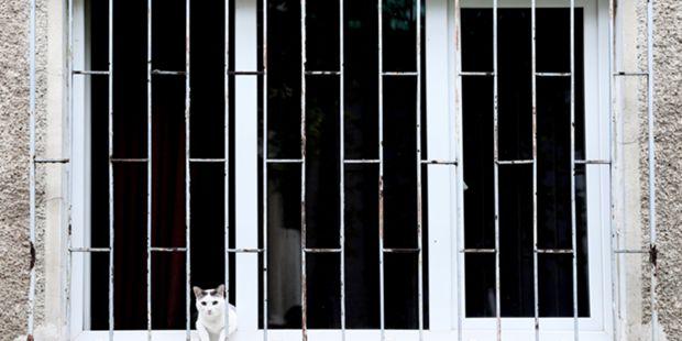 PSP da Amadora encontra 13 gatos mortos em apartamento