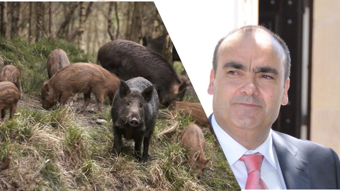 Figueiró dos Vinhos | Estragos de javalis recomendação à câmara do Vereador do PSD, Engº Filipe Silva