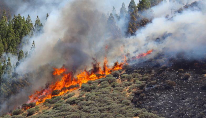 Mais de 20 concelhos em risco muito elevado de incêndio