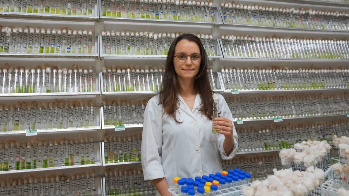 Equipa internacional descobre nova família de microalgas de água doce