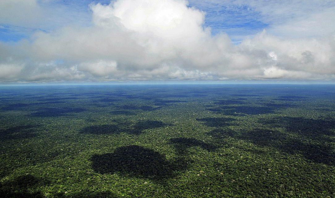 Um quarto de terras públicas da Amazónia brasileira tem registo ilegal de propriedade