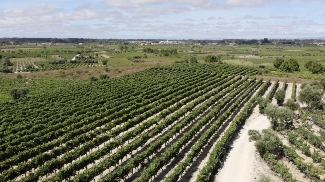 Cantanhede | Entre as freguesias de Cordinhã e Ourentã