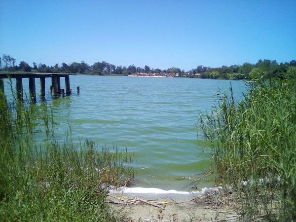 Os Verdes voltam a questionar o Governo sobre a eutrofização da Lagoa de Mira
