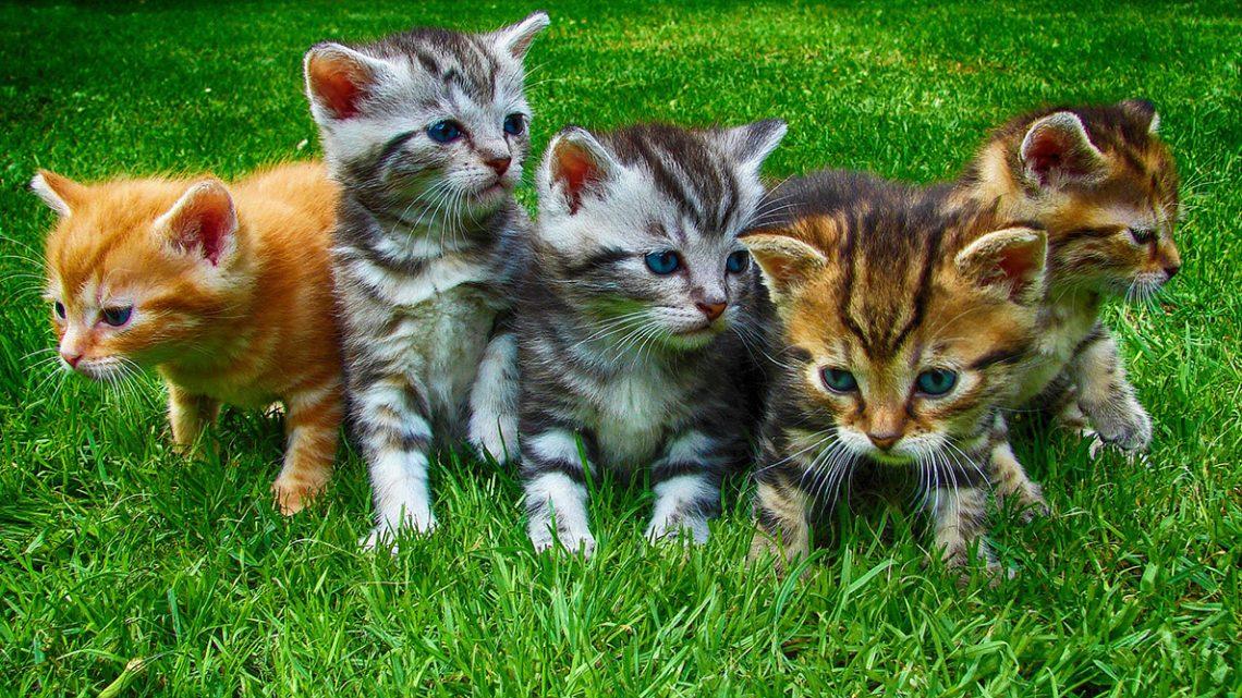 Município de Reguengos de Monsaraz promove Programa de Captura, Esterilização e Devolução de gatos errantes