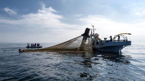 Apreendidos nove viveiros ilegais na ria de Aveiro