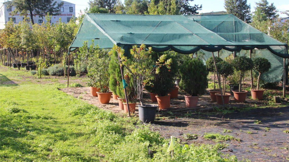Proença-a-Nova | Troque resíduos por plantas regressa a 21 de outubro