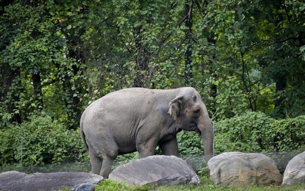 """O elefante """"Happy"""" é uma pessoa?"""