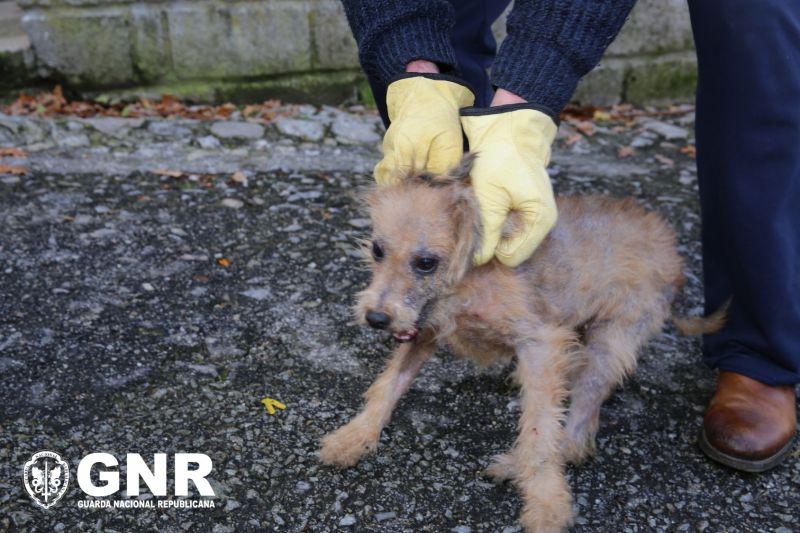 GNR resgata 25 cães vítimas de maus-tratos em Seia