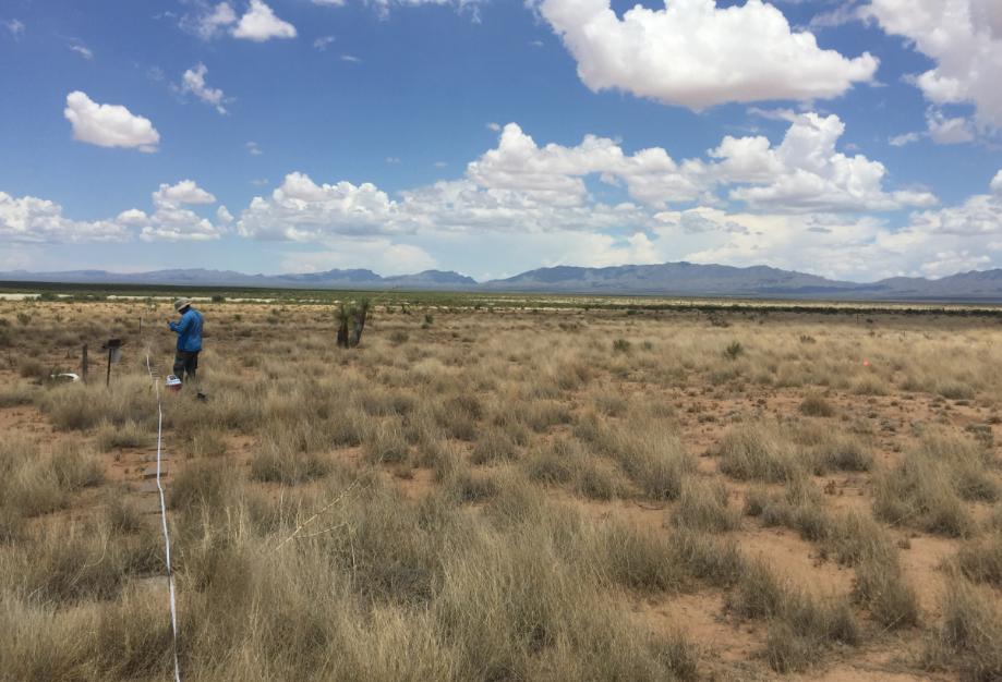 Estudo luso-espanhol ajuda a compreender e a prever os efeitos das alterações climáticas na biodiversidade do solo