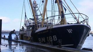 Pescadores britânicos sentem-se traídos pelo Brexit