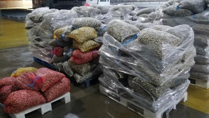 GNR apreendeu mais de oito toneladas de berbigão em Aveiro